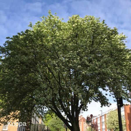Unknown tree 02