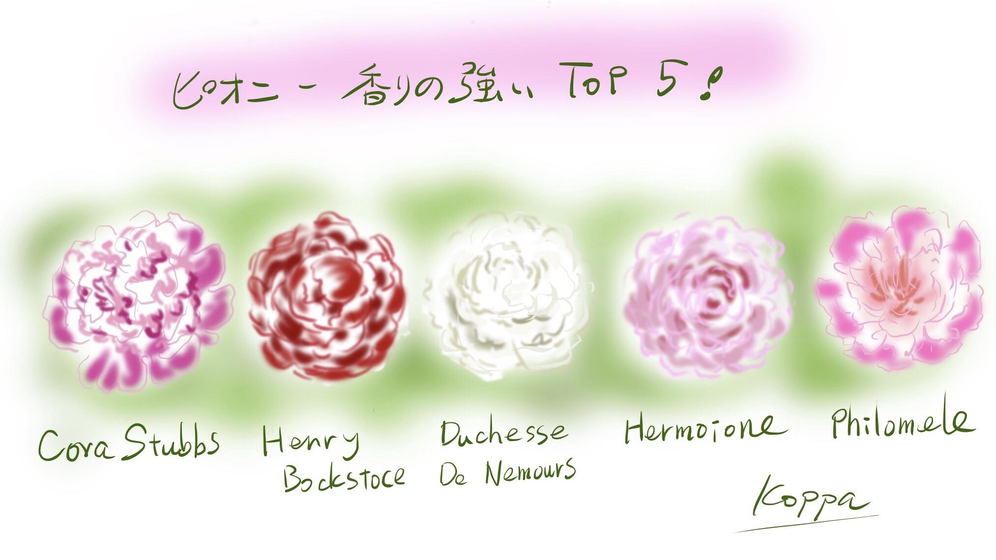 香りの良い牡丹5種